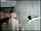 своеобразный уход за кошкой